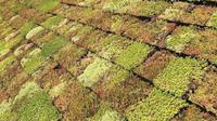 Motode atap hijau yang bisa membantu mengurangi panas yang ada di dalam rumah. (dok. Instagram @groendak/ https://www.instagram.com/p/BlKooBSnKle/?igshid=sl4flv77vd7h/ Dinda Rizky)