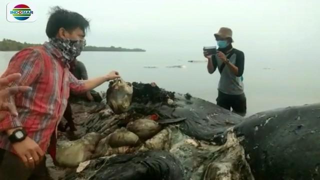 Menteri Kelautan dan Perikanan, Susi Pudjiastuti, bereaksi terkait temuan paus yang mati diduga akibat memakan sampah plastik di Wakatobi, Sultra.