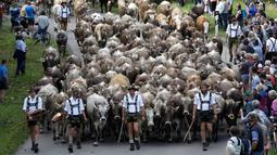 Warga menyaksikan penggembala Bavaria menggiring hewan ternak mereka di pegunungan dekat Oberstdorf, Jerman, Kamis (13/9). Hewan-hewan ternak ini akan digiring ke lembah untuk menghabiskan musim dingin. (AP Photo/Matthias Schrader)