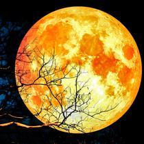 Supermoon yang terjadi pada Januari 2019 atau disebut juga sebagai Super Blood Wolf Moon. (iStockohoto)