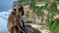 Monyet di Pura Uluwatu, Bali. (dok. Instagram @ vladimira.vaclavikova/https://www.instagram.com/p/Bu_uZhvnpR7/?igshid=6oy5hx88952x)