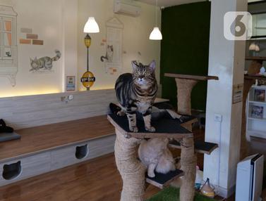 Persiapan Penerapan New Normal di Cat Cafe
