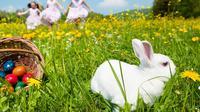 Mungkin ini juga yang kamu pertanyakan, kenapa kelinci dan telur erat kaitannya dengan perayaan Paskah? Temukan jawabannya di sini.