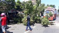 Pohon mendadak tumbang di Banjarnegara dan menyebabkan dua siswi SMA N 1 Banjarnegara meninggal Dunia. (Foto: Liputan6.com/RAPI BNA/Muhamad Ridlo)