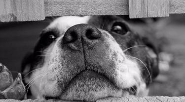 Sadis, Pria Ini Bunuh dan Bantai Anak Anjing Secara Streaming