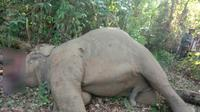 Gajah di Riau mati dalam kondisi mengenaskan. (Liputan6.com/M Syukur)