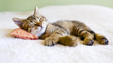 Bisa Tidur Hingga 16 Jam Sehari, Ini Fakta Lain Kebiasaan Tidur Kucing