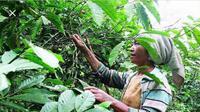 Kepala Dinas Pertanian Nusa Tenggara Timur (NTT)  Yohanes Tay Ruba berjanji, akan terus mendorong petani kopi di Manggarai,  dalam rangka meningkatkan produktivitas kopi Arabika maupun Robusta.