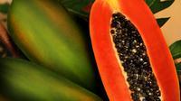 Ilustrasi buah pepaya | Via: istimewa