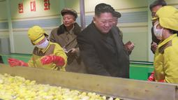 Pemimpin Korea Utara Kim Jong-Un saat melihat produksi kentang di pabrik Samjiyon Potato Farina  di Samjiyon County (30/10). (Photo by KCNA VIA KNS / KCNA VIA KNS / AFP)