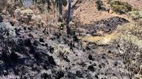 Lahan di Gunung Arjuno hangus terbakar mengancam berbagai satwa di kawasan Tahura R Soerjo (BPBD Kota Batu)