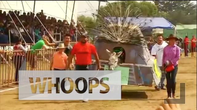 Festival ini pertama kali dimulai 60 tahun lalu sebagai penghargaan terhadap hewan paling bekerja keras di Otumba.