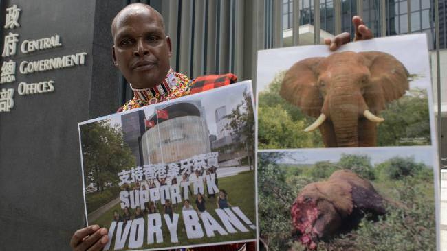Petugas kehutanan bernama Chris Leadismo dari badan non-pemerintah Save the Elephants menunjukkan foto-foto pembantaian gajah yang dicuri gadingnya. (Sumber AFP/Anthony Wallace)