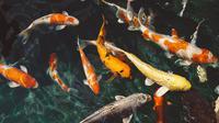 Ciri-ciri ikan sumber: Pexels