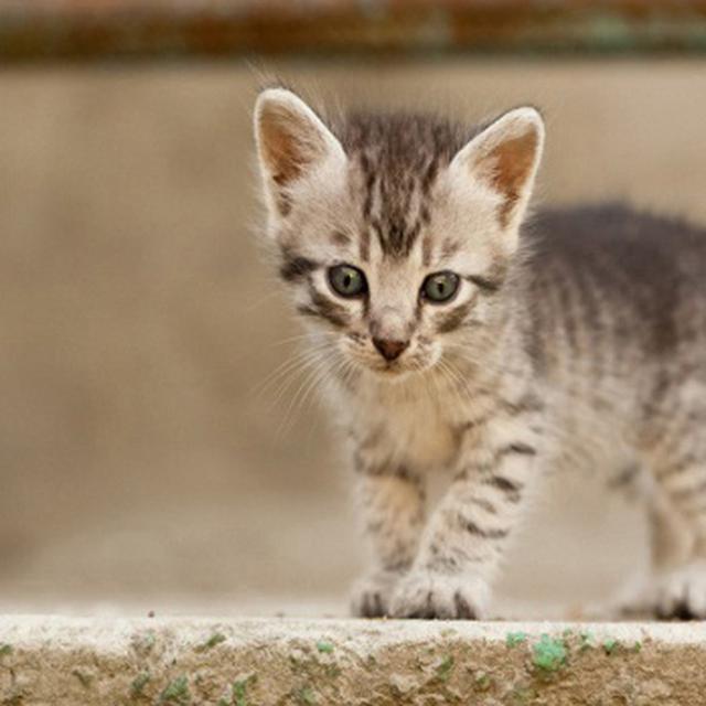Makanan Anak Kucing Umur 1 Bulan Dan Cara Merawatnya Perhatikan Nutrisinya Hot Liputan6 Com