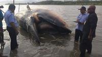 Bangkai Paus Bryde dengan panjang 10 meter ditemukan terdampar di pesisir pantai Kampung Timika Pantai (Istimewa)