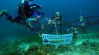 Salah seorang anggota Female Divers tengah mengabadikan wadah terumbu karang yang baru saja ditempatkan di laut Pulau Pramuka, Kepulauan Seribu (Sabtu, 8/12/2019). foto: istimewa