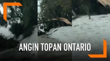 Pohon besar tumbang yang diakibatkan dari tiupan angin topan di Ontario, Kanada. Kejadian alam tersebut mengakibatkan pemadaman listrik, menutup jalan dan kecelakaan kendaraan.