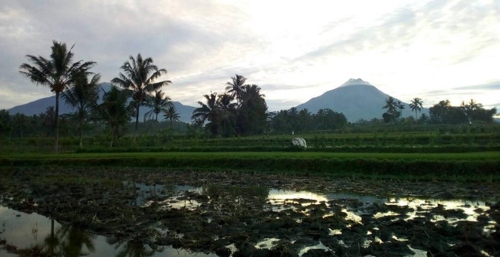 Kadangkala matahari terbit tanpa menyiratkan sinar jingga, namun tak mengurangi keanggunan Merapi. (foto : Liputan6.com / edhie prayitno ige)