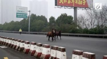 Tiga ekor kuda masuk dan berlarian di jalan tol Provinsi Hunan, China. Akibatnya, lalu lintas pun menjadi kacau.
