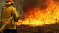 Kebakaran hutan di Australia. (Source: AP/ Darren Pateman)