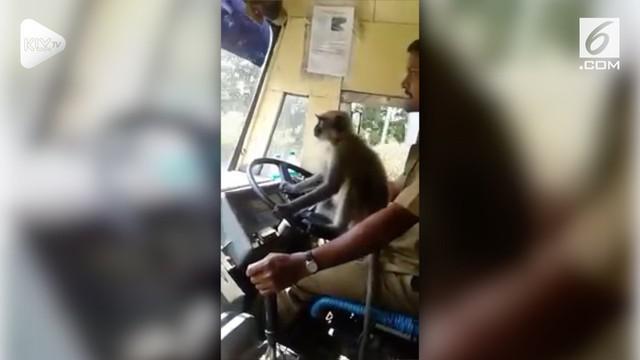 Sebuah video viral menunjukkan aksi monyet 'menyetir' bus layaknya manusia. Bus tujuan Devanagari-Bharamasagara itu membawa beberapa penumpang.