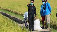 Mentan Syahrul Yasin Limpo Panen Raya di Bangka Selatan