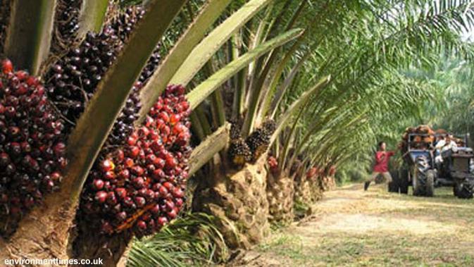 Petani Minta Pemerintah Cabut Pungutan Ekspor CPO