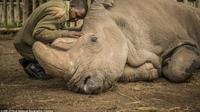 Sudan, Badak Putih jantan teraakhir di dunia akhirnya mati (© natgeo creative)