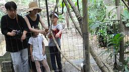 Wisatawan melihat Bunga Rafflesia Padma yang mekar di Kebun Raya Bogor (8/9). Bunga padma yang merupakan endemik di kawasan Pesisiir Selatan Jawa Barat ini mekar 3 tahun lalu dan merupakan tanaman unggulan di Kebun Raya Bogor. (Merdeka.com/Arie Basuki)