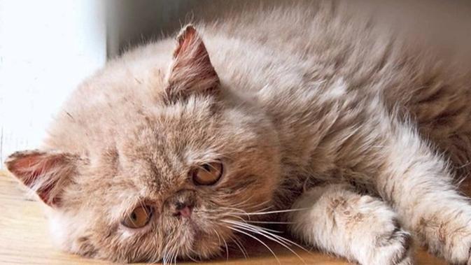 Diabaikan Pemiliknya Bulu Kucing Ini Gimbal Tak Karuan Lifestyle Fimela Com