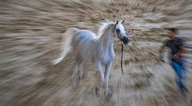 Seekor kuda Arab berwarna putih diarak untuk menunjukkan kelincahnnya dalam kontes Kecantikan Kuda Arab di desa Abusir, sekitar 20 km barat daya ibu kota Mesir, Kairo, 5 Oktober 2019. Kontes tersebut memperebutkan gelar kuda arab terindah. (Photo by Khaled DESOUKI / AFP)