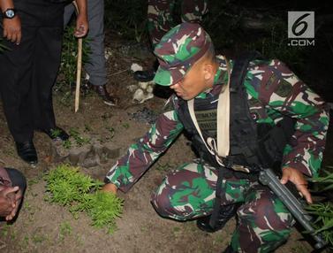 Mafia Ganja Wamena Papua