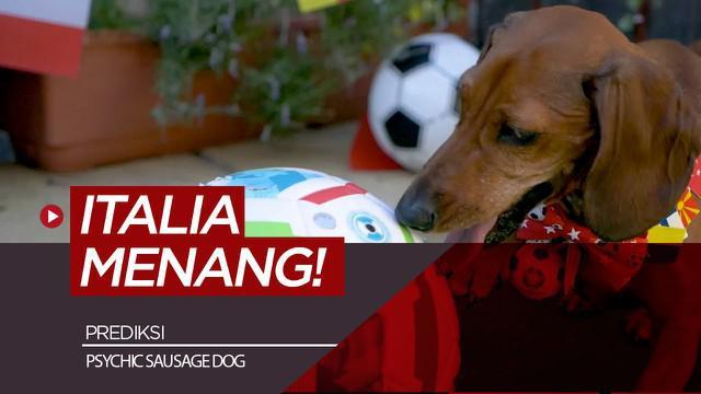 Berita video prediksi laga semifnal Euro 2020 antara Italia vs Spanyol oleh anjing Psychic Sausage Dog.
