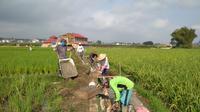 Kegiatan Padat Karya Tunai di Sumatera Barat