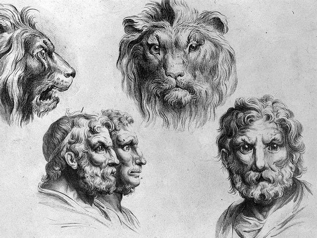 7 Hewan Yang Dianggap Wajahnya Mirip Manusia Selain Kera Citizen6