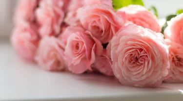 Ilustrasi bunga mawar   pexels.com