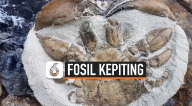 vertical fosil