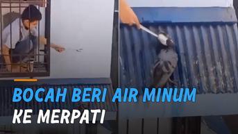 VIDEO: Momen Manis Bocah Beri Air Minum ke Merpati di Atap Rumah