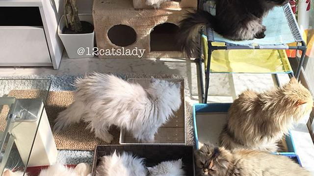 Download 92+  Gambar Kucing Persia Dalam Kandang Paling Imut Gratis