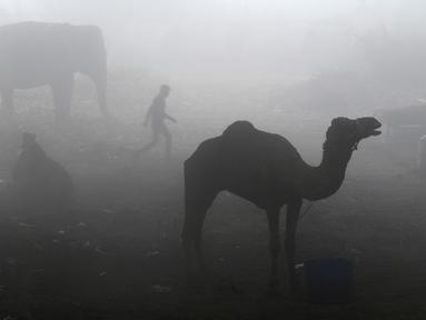 Seorang pria India berjalan melewati unta dan gajah di bawah jembatan pada saat kabut pagi menyelimuti di New Delhi (08/12/2016). (AFP PHOTO/Uang SHARMA)