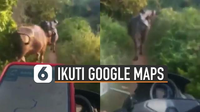 Beredar video pengendara motor dikerjai oleh Google Maps. Karena mereka harus melewati jalan kecil dan terkena macet kerbau.