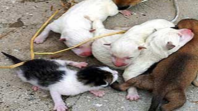 Aneh Tapi Nyata Anjing Melahirkan Kucing Global Liputan6 Com