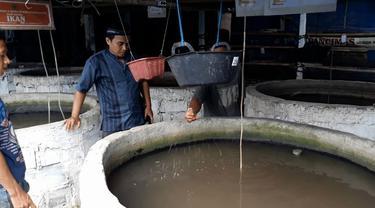 Budidaya ikan dengan sistem bioflok dan memanfaatkan pakan organik berupa maggot. (Foto: Liputan6.com/Muhamad Ridlo)