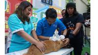 Pemerintah Provinsi DKI Jakarta memberikan 500 microchip gratis khusus untuk anjing sebagai hewan peliharaan.