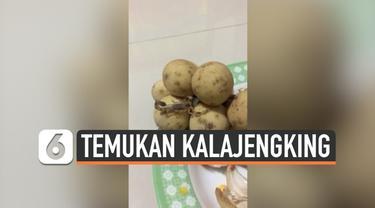 Seorang wanita Thailand terkejut mengetahui ada yang tidak biasa pada barang belanjaannya. Ia menemukan seekor kelajengking berukuran kecil pada buah langsat yang baru saja dibeli.