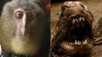 hewan aneh (sumber : Boredpanda)