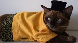 Seekor kucing mengenakan pakaian untuk hari raya Idul Fitri terlihat di sebuah apartemen di Shah Alam, di pinggiran Kuala Lumpur (5/5/2021). Toko Meowku penjualannya melonjak karena orang-orang merawat hewan peliharaannya. selama pandemi virus corona. (AFP Photo/Sam Reeves)
