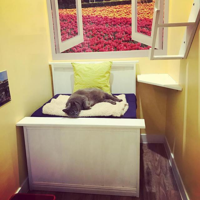 Hotel mewah untuk kucing, The Vet Lounge, Coomera, Australia. ((dok. Instagram @thevetloungeboarding/https://www.instagram.com/p/BtkEn9qhMFS//Adhita Diansyavira))