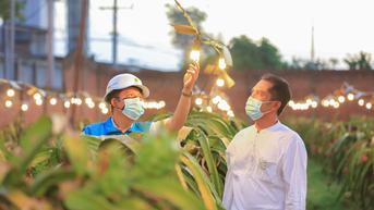 Lewat Electrifying Agriculture, PLN Bantu Tingkatkan Kesejahteraan Petani